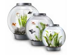 Acrylic Aquariums For Sale