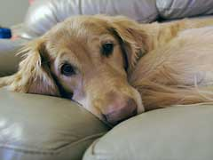 Arthritis in Dogs Treatment