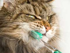 Cat Dental Health