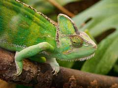 Chameleon Pet Care
