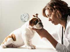 Dog Incontinence Causes