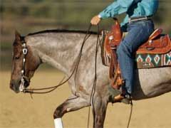 Horse Training Tips
