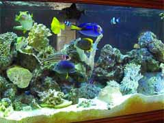 Saltwater Aquarium Supplies