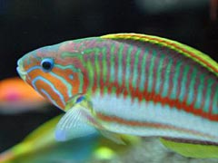 Aquarium Tropical Fish