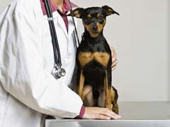 Dog Illness Diagnosis