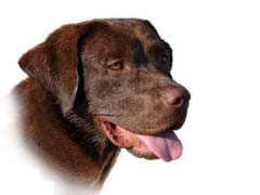 Natural Glaucoma Treatment For Dogs