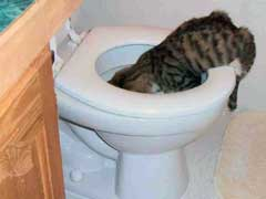 Cat Vomiting Causes