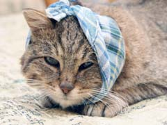 Sick Cat Symptoms