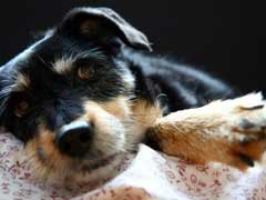 Vetprofen Side Effects In Dogs